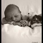 photographe naissance 83